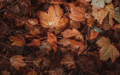Leaf Traps on Your Gutters Offer Extra Protection